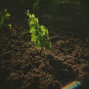Baldiri-Vins-004