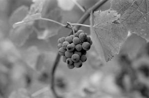 Baldiri-Vins-006