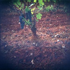 Baldiri-Vins-007