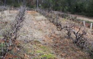 Can-Baldiri-Baldiri-Vins-Vinyes-001
