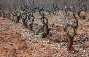 Can-Baldiri-Baldiri-Vins-Vinyes-007