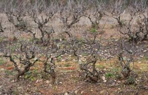 Can-Baldiri-Baldiri-Vins-Vinyes-016